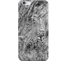 The Jungles Majestic - Cheetah (Acinonyx jubatus) iPhone Case/Skin