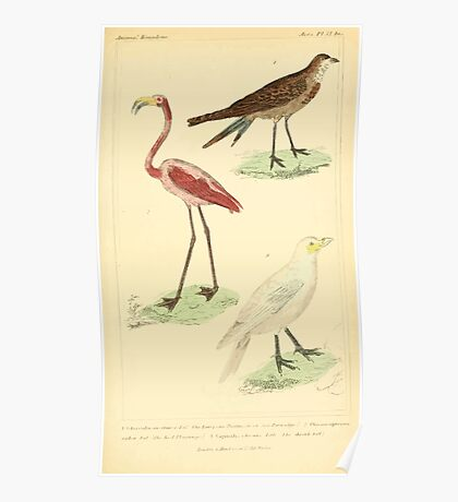 The Animal Kingdom by Georges Cuvier, PA Latreille, and Henry McMurtrie 1834 742 - Aves Avians Birds Poster