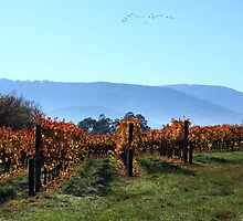 Autumn Vines by WendyJC