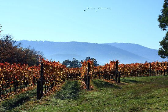 Autumn Vines by WendyJC