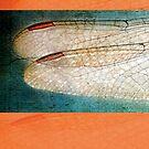 Wings Scarf~Orange Borders by Susan Werby