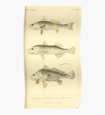 The Animal Kingdom by Georges Cuvier, PA Latreille, and Henry McMurtrie 1834  087 - Pisces Fish Poster