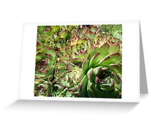 Hens and Chicks Greeting Card
