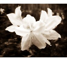 Diffused Flower 5 Photographic Print