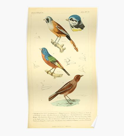 The Animal Kingdom by Georges Cuvier, PA Latreille, and Henry McMurtrie 1834 670 - Aves Avians Birds Poster