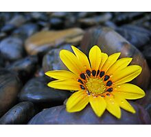 Yellow Flower Blackrock Photographic Print