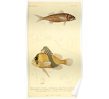 The Animal Kingdom by Georges Cuvier, PA Latreille, and Henry McMurtrie 1834  044 - Pisces Fish Poster