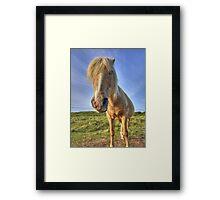Longis Horsey - Alderney Framed Print