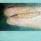 Wings Scarf Aqua Borders by Susan Werby