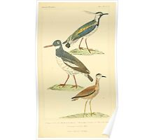 The Animal Kingdom by Georges Cuvier, PA Latreille, and Henry McMurtrie 1834 737 - Aves Avians Birds Poster