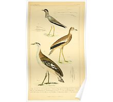 The Animal Kingdom by Georges Cuvier, PA Latreille, and Henry McMurtrie 1834 725 - Aves Avians Birds Poster