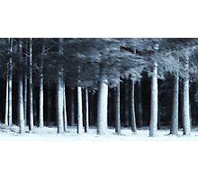 The Wood Photographic Print
