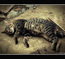 my cat is dead by arif 86photografy