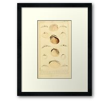 The Animal Kingdom by Georges Cuvier, PA Latreille, and Henry McMurtrie 1834  275 - Mollusca Mollusks Framed Print