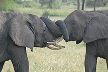 Trunk Wrestling, Tarangire National Park, Tanzania by Adrian Paul