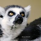 Lemur See About That by Bunny Clarke