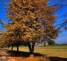 Colorific autumn by Knedl