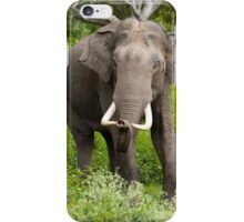 Young Borneo Elephant