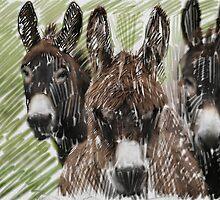 3 Donkeys by ilass