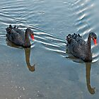 Black Swans by mspfoto
