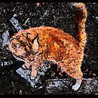 Orange Cat With White Boots by Deborah Dillehay