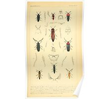 The Animal Kingdom by Georges Cuvier, PA Latreille, and Henry McMurtrie 1834  430 - Insecta Insects Poster