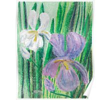 Iris in May -oil pastels Poster
