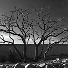 Chaste Tree in Winter by Linda Gregory