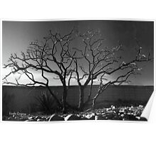 Chaste Tree in Winter Poster