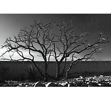 Chaste Tree in Winter Photographic Print