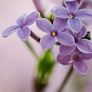 Macro Lilacs In Stu 2 by Douglas Gaston IV
