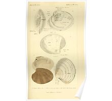 The Animal Kingdom by Georges Cuvier, PA Latreille, and Henry McMurtrie 1834  276 - Mollusca Mollusks Poster