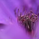 Soft Purple by Jacky Parker