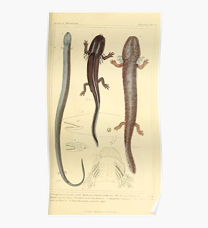 The Animal Kingdom by Georges Cuvier, PA Latreille, and Henry McMurtrie 1834  042 - Reptilia Reptiles Poster