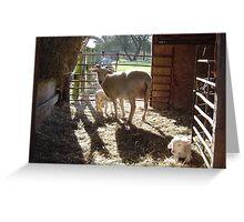 Lambing shed Greeting Card