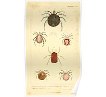 The Animal Kingdom by Georges Cuvier, PA Latreille, and Henry McMurtrie 1834  407 - Arachnides Arachnids Poster
