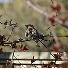 Perching Pretty by TingyWende