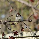 Birdhouse Bird by TingyWende