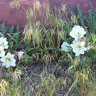 Desert Penroses by Highlyamused