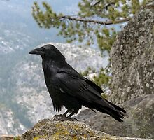 The Raven by James Webb