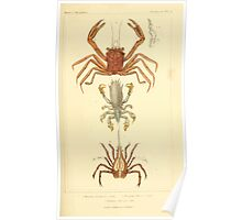 The Animal Kingdom by Georges Cuvier, PA Latreille, and Henry McMurtrie 1834  320 - Crustacea Crustaeans Poster