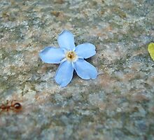 Forget me not, said the little ant... by Paola Svensson