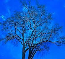 Tangled up in Blue by Cameron  Allen Lamond