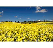 I see yellow Photographic Print