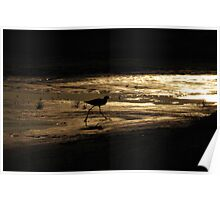 Sunset Avocet Poster