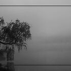 the willow, the fog and me... by aspectsoftmk