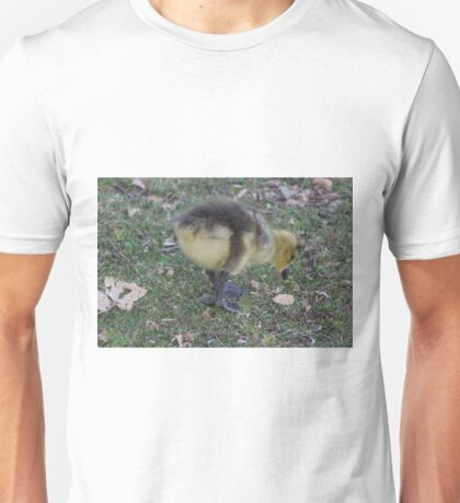 Baby bird from Canada Geese Unisex T-Shirt