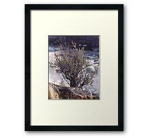 Lone Sage Framed Print