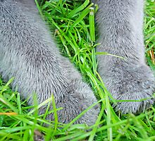 Paws in the grass by Paola Svensson