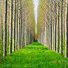 Lac du Der forest by Victor Pugatschew